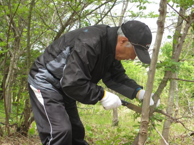 Akita_150510_2.jpg